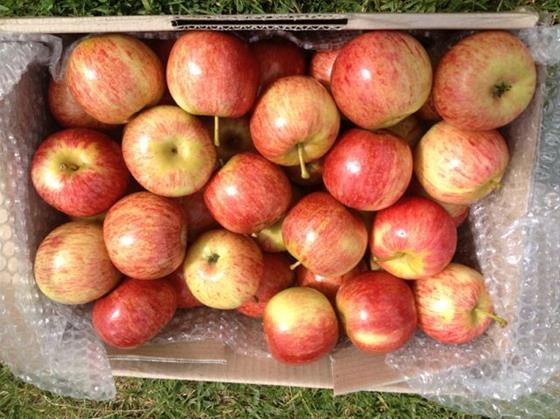 Apple Basket 5 KG