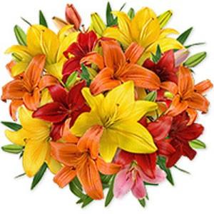 Charming Lilies