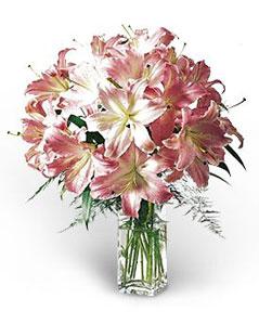 Lilies Elegance