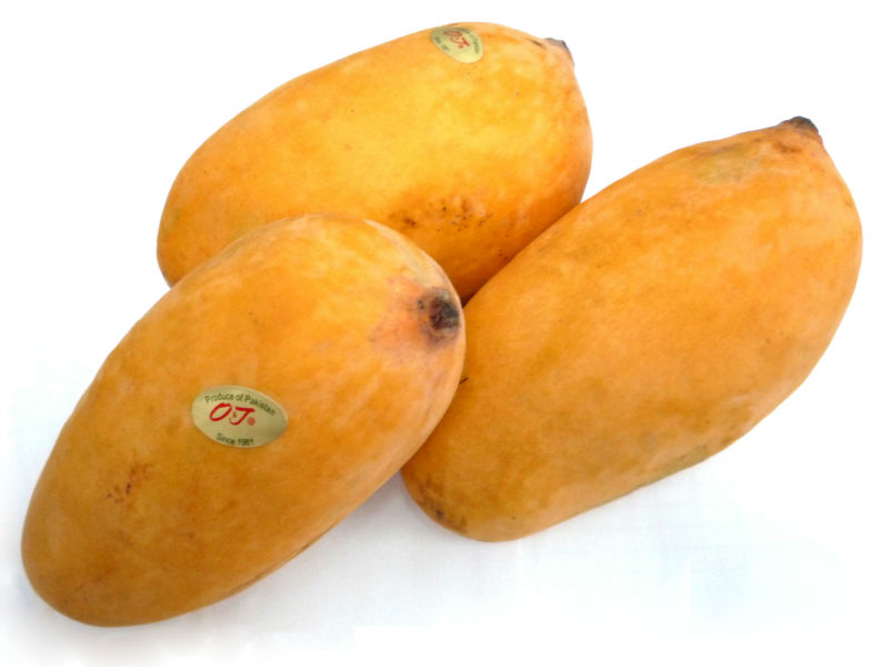Sindhri Mangoes 10 KG in a Box