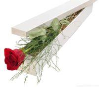 single-rose-in-a-box