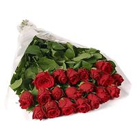 imported-red-roses